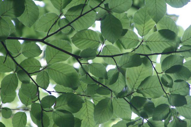 Colloque : Plantes, nature et santé