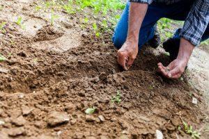 Les semences paysannes, c'est dans nos gênes