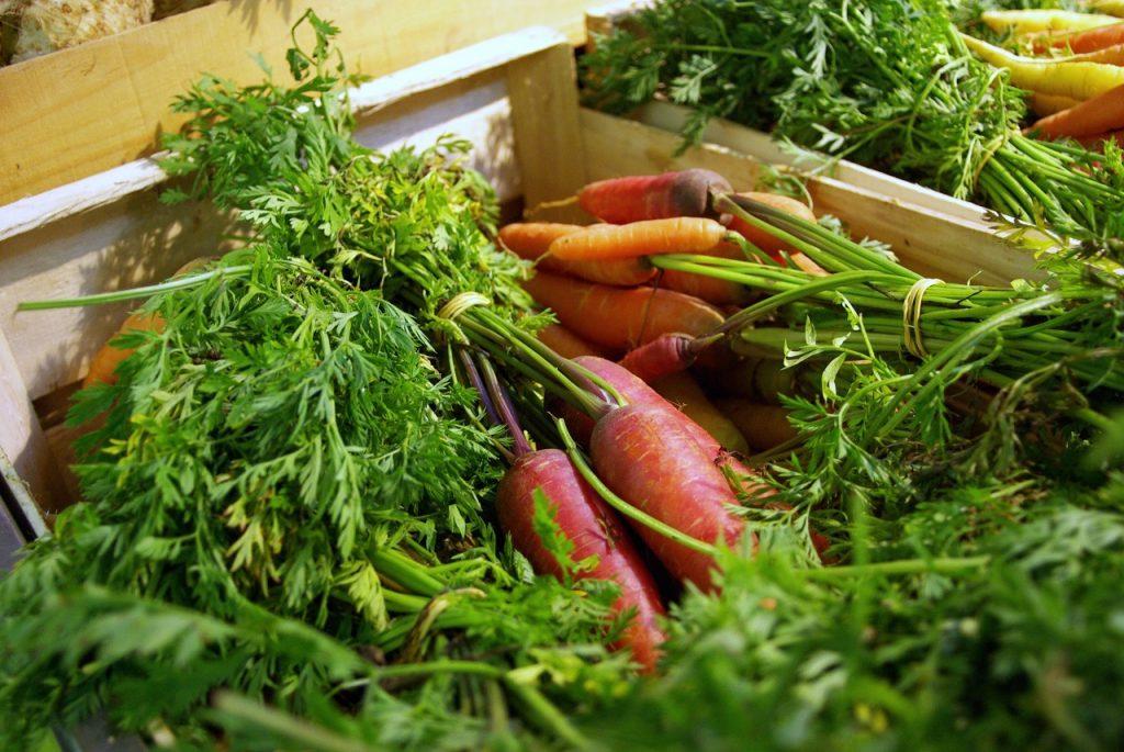 fenouil biocoop sarge magasin bio le mans legumes 2017