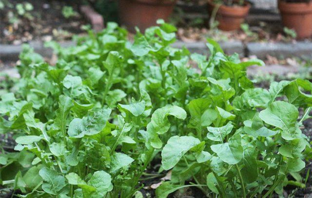 De la nature à l'assiette, plantes sauvages comestibles