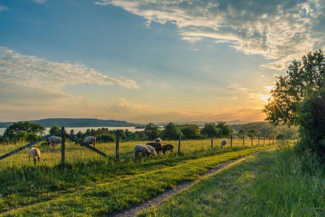 Vacances reposantes et dépaysantes à la ferme