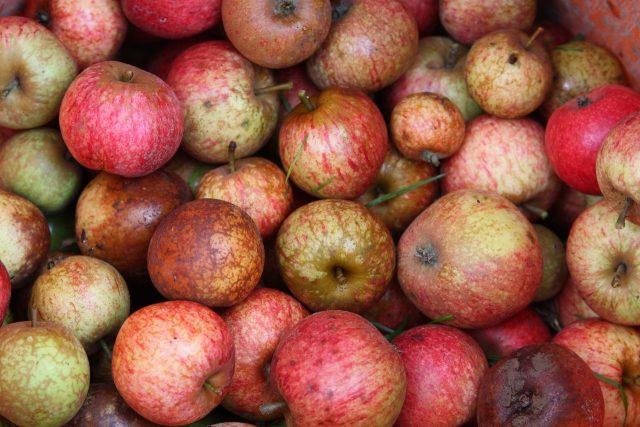 Fête de la pomme et de la châtaigne