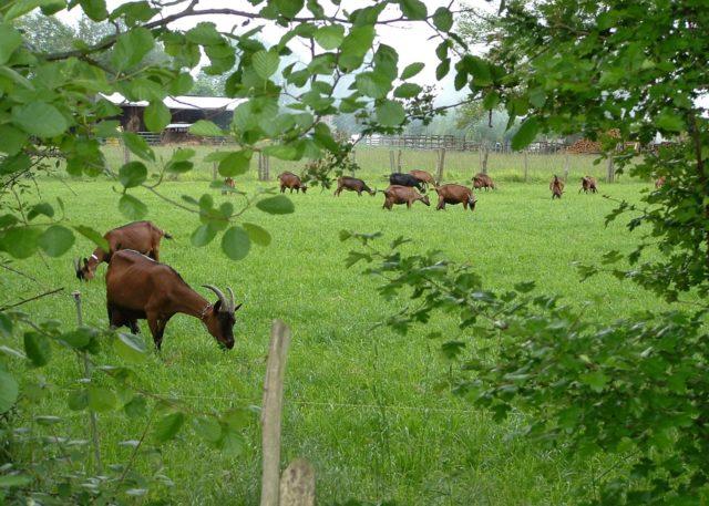 Quatre fromagers de chèvre et de brebis bio