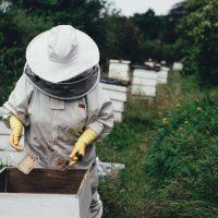 Pollen, miel, propolis, quel produit pour quel usage ?
