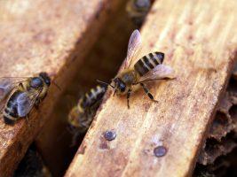 "Gamme ""Nectar de miels"" de Melvita"