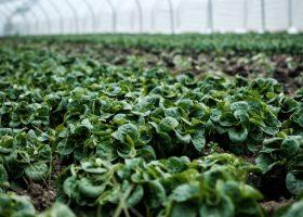 Conférence-débat : agriculture périurbaine et agrobiologie