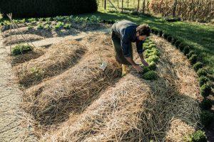 Découverte de la permaculture : plantes vertes et sécheresse