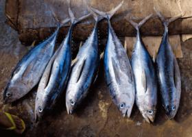 Alternative durable à l'albacore : le listao