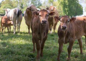 Agrotourisme : vacances dépaysantes à la ferme