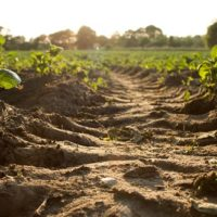 Conférence-débat : vie des sols et changement climatique