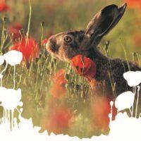 7ème édition du Festival Nature & Environnement
