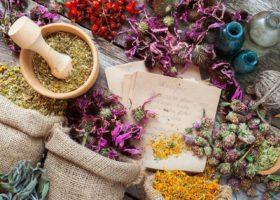 Atelier bien-être : introduction à la phytothérapie