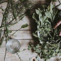 Atelier bien-être : plantes médicinales de printemps