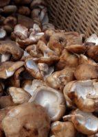 Champiculture Val'Lentin, champignons shiitakés bio