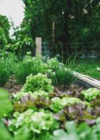 Jardinage bio : des semis ou des plants ?
