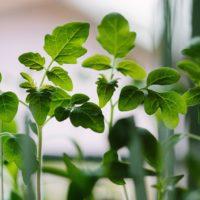 Jardin #bioetlocal : vente de plants non hybrides