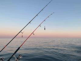 Biocoop engagé pour la pêche à la canne